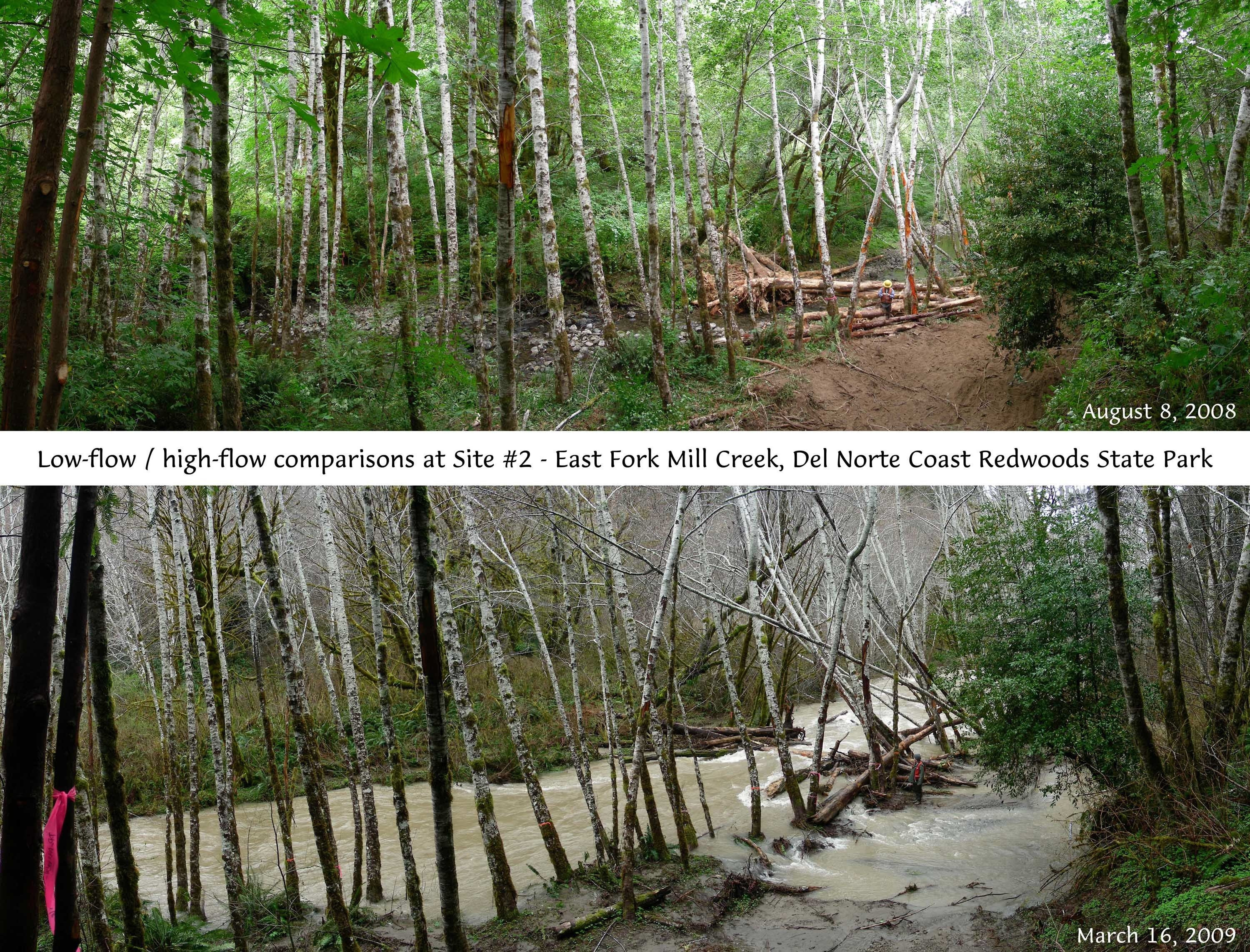 Mill Creek Habitat Restoration